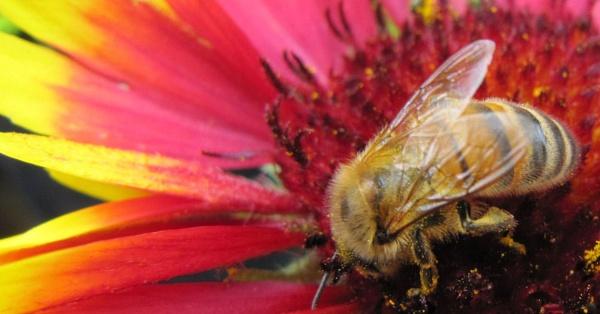 pollen addiction by Davlaw
