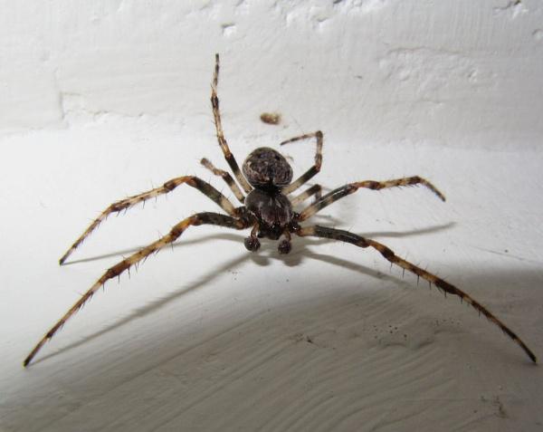 Bathroom spider by Davlaw