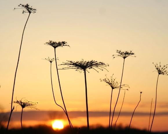 Sunset sence by manicam