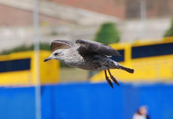 Seagull by avon