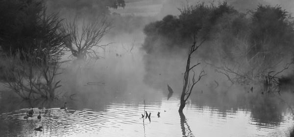 Misty Lake. by Gecko