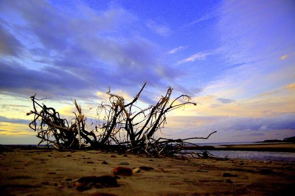 Beach Tree by AJB_yeh