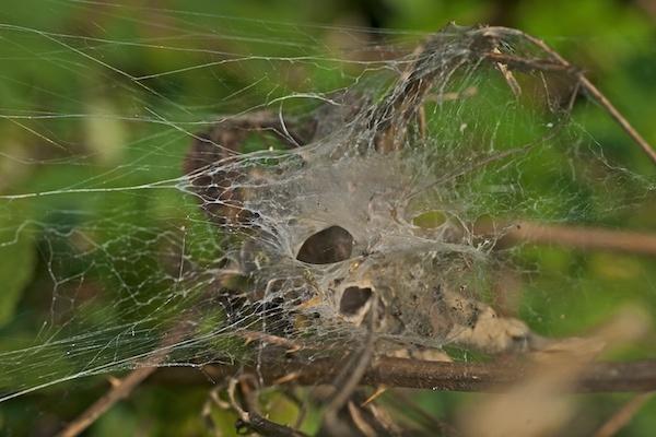 Web by JasperD
