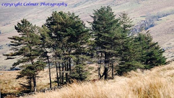Trees by colmar