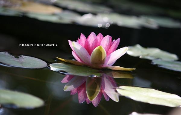Reflection by Oshea