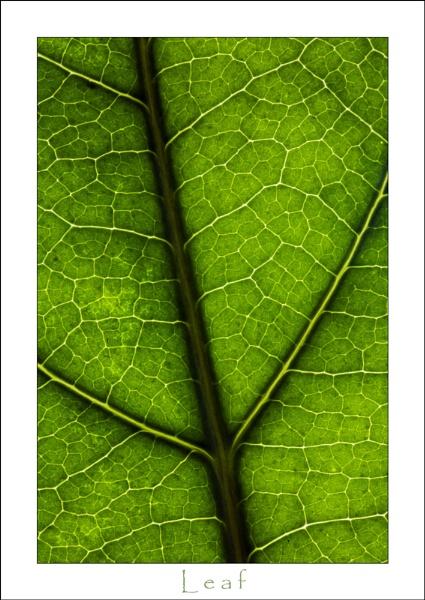 Leaf by allan_j
