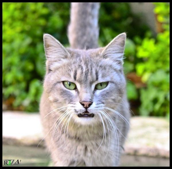 Cat Eye by R3za