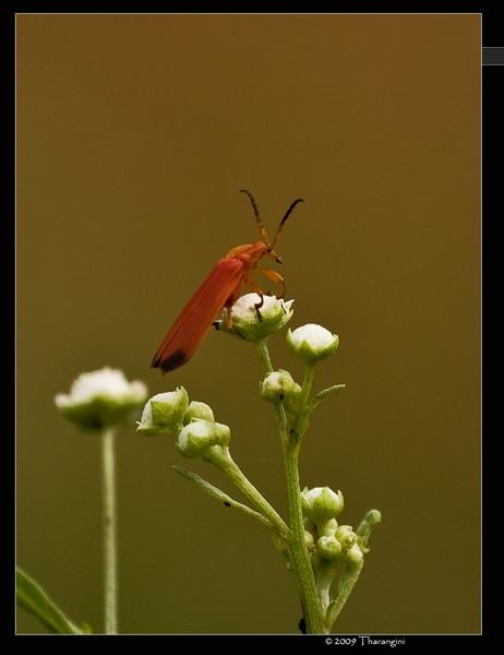 macro insect by tharang_b9