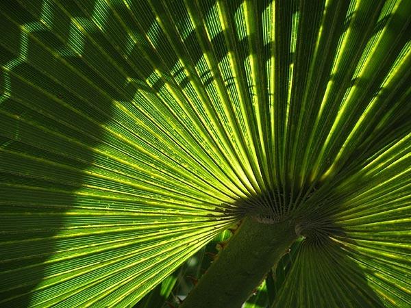 Leaf Shadows by TrevorB