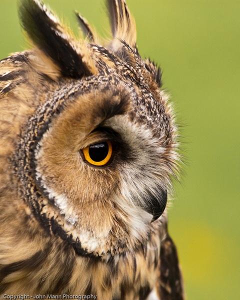 Long Eared Owl by canonfan46