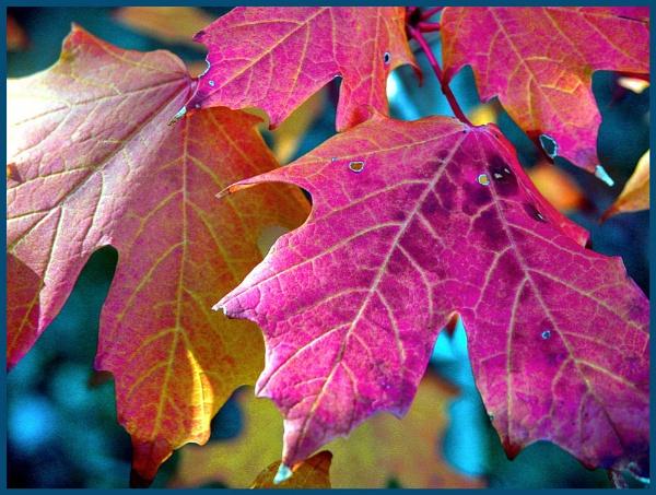 Autumn Splendour by VonQ