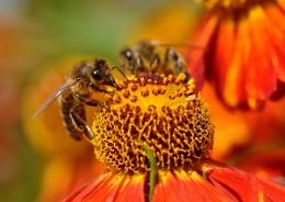 Bee Watching You