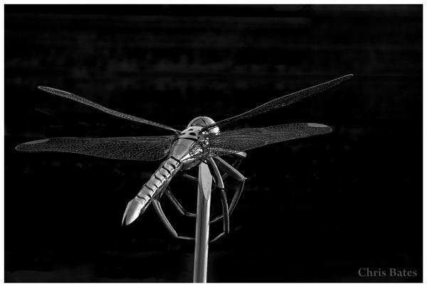 Dragonfly by heliflyer
