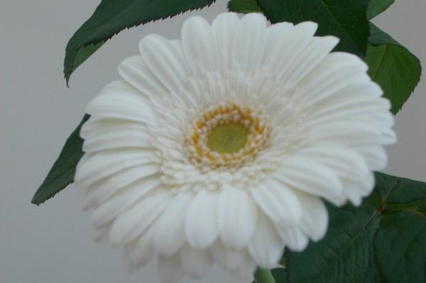 White Flower by emily1965