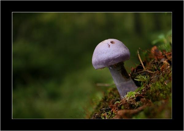 Mushroom VI by suregork