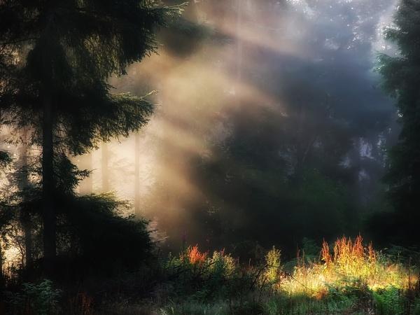 Sunrays Through Forest by tywanda46