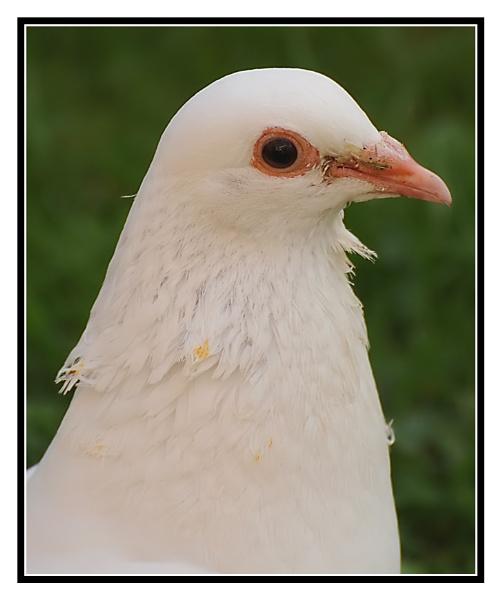 White Dove by m3lem