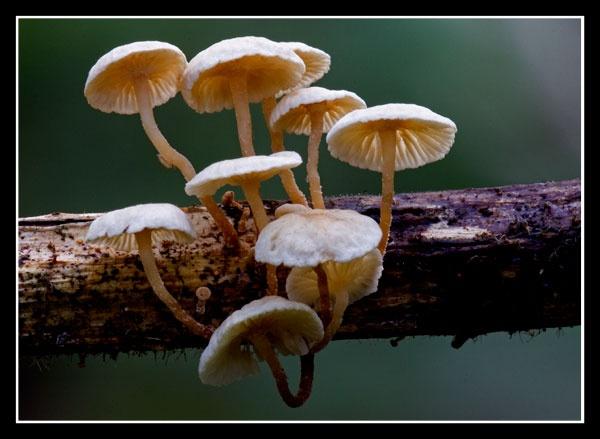 Fungi by BobbyP