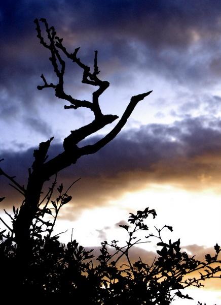 Cool Tree by AJB_yeh