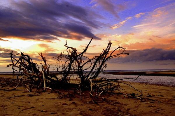 Sea branch by AJB_yeh