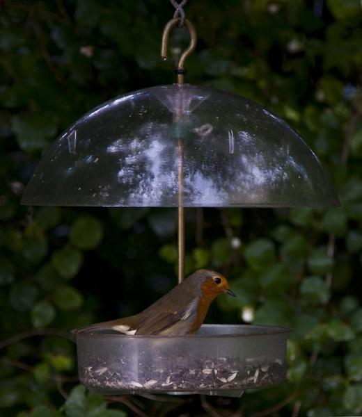 Feeding the Robins by GrahamBaines