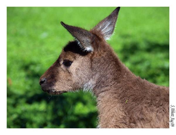 Wild Roo by elaronndy