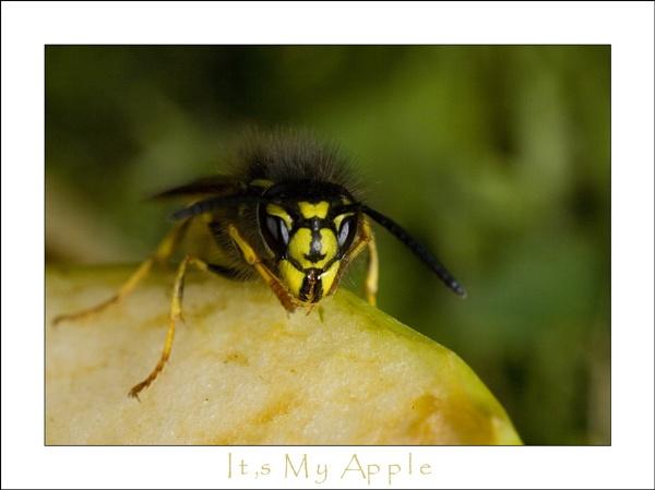 It,s my apple !!!! by allan_j