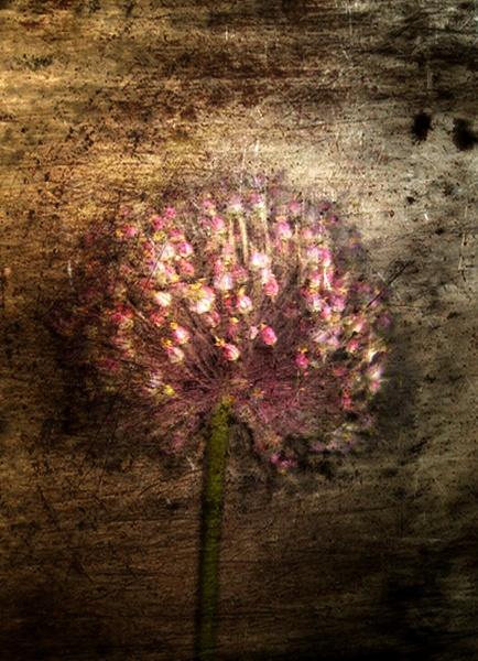 garlic by Naidie