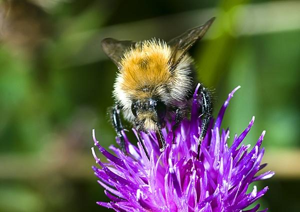 busy bee by DanielDCP