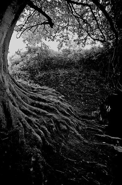 roots by JBA