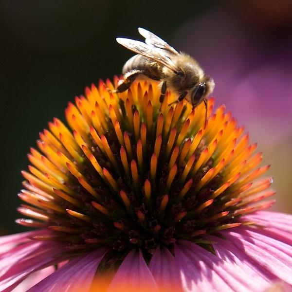 The Pollinator by foz