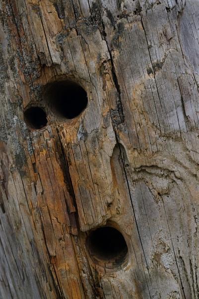 Groyne Face by baclark