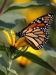 Last Butterfly of Summer