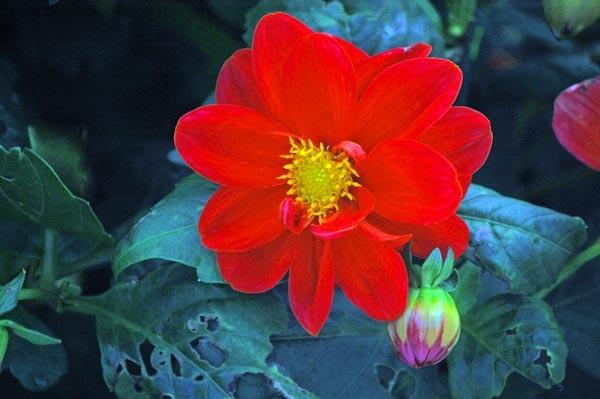 flower by linda68