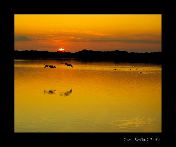 Swans in flight by ASM9633