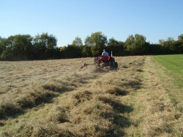 tedding the hay by lindah303