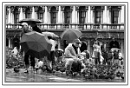 A Rainy Day in Venice