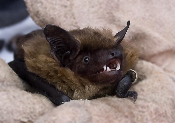 Bat by jayman