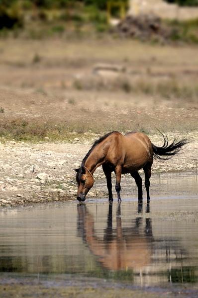 Tsonevo Dam 2 by acbeat