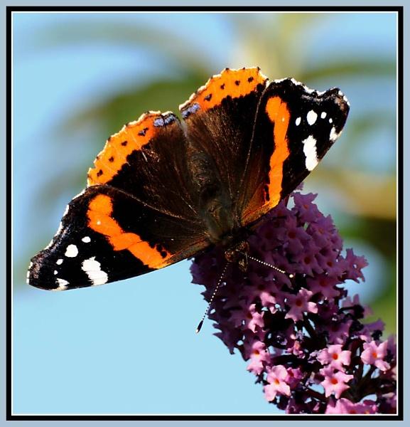 September butterfly by m3lem