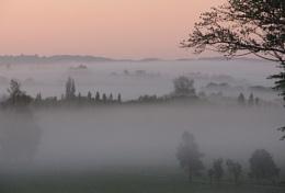 Valley Mist.
