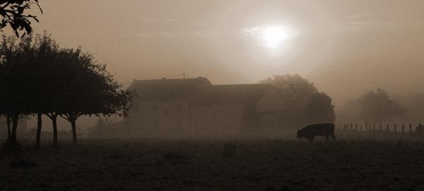 morning mist by sarmour