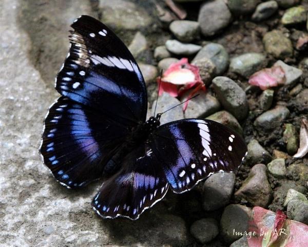 Purple Heart by andrewrit