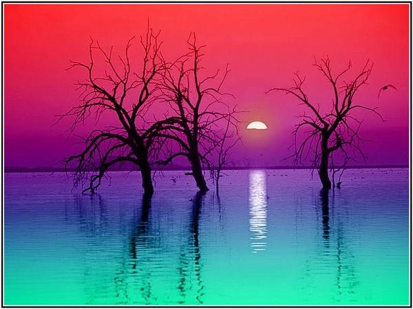 Colorful Delight by Bob_V