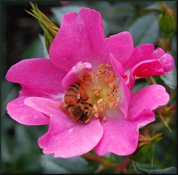 busy bee by CherryMartin
