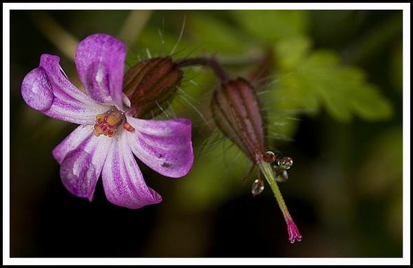 Weed or Flower.........?? by urdygurdy