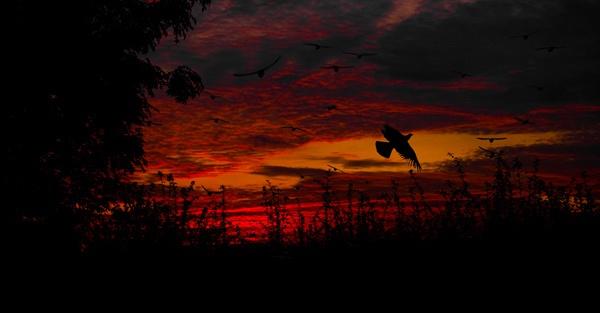 Fly away by mcgovernjon