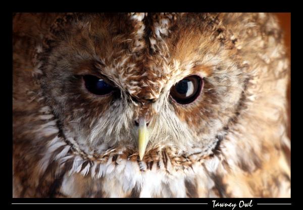 Wise Eyes by SteveMoulding