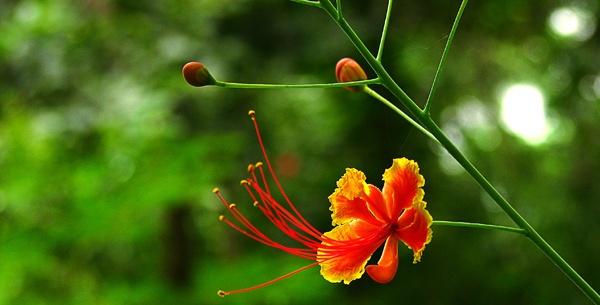 Beautiful Flower by Saibal