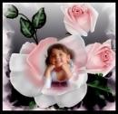 tamzin pure rose